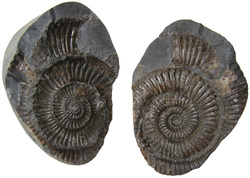 Index fossils are used in the type of dating called